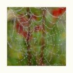 Spinnennetz_