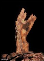 Steinerne Hand Korsika